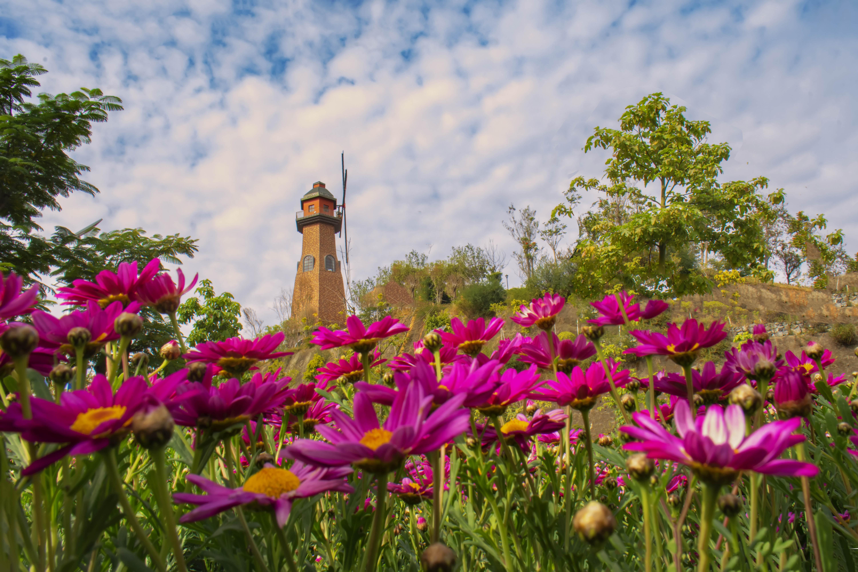 花儿与风车