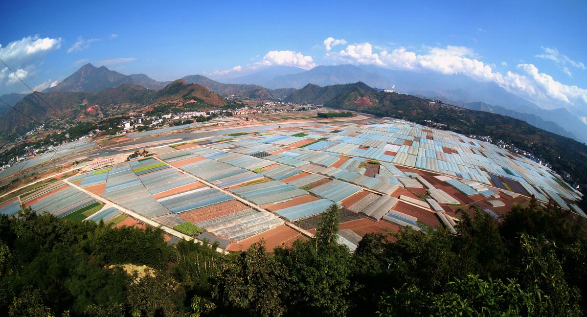 果蔬生产规模化