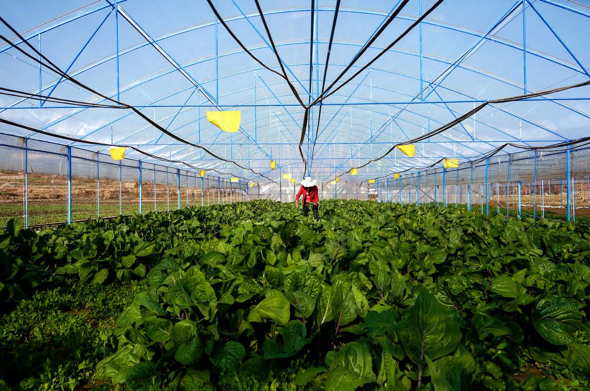 无公害种植蔬菜